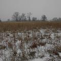 Prairie Snow by Dylan Punke