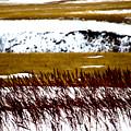 Prairie Winter by Darcy Dietrich