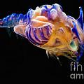 Prawn Larva by Dant� Fenolio
