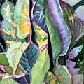 Pray Plant by Mindy Newman