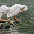 Prayer Of The Pelicans by Teresa Blanton