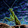 Praying Mantis by Dr Charles Ott