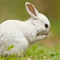 Praying White Rabbit by Roeselien Raimond