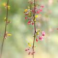 Pre Blossoms by Walter Martin