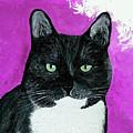 Precious The Kitty by Ania M Milo