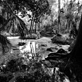 Precolumbian Florida by David Lee Thompson