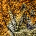 Predator 5 by Scott Hovind