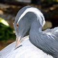 Preening Bird by David Lee Thompson
