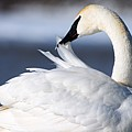 Preening by Larry Ricker