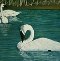 Preening Swans by Robert Tower