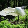 Preening The Wings by Cynthia Guinn