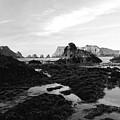 Prehistoric Land by Donna Blackhall