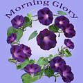 President Tyler Morning Glory by Chris Busch