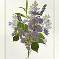 Pressed Dried Flower Painting - Blue Hydrangeas Lavender Ferns by Audrey Jeanne Roberts