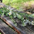 Pretty Bench by Stephanie Kripa