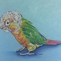 Pretty Bird by Arrin Burgand