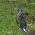 Pretty Bird by Rich Bodane