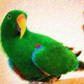 Pretty Eclectus Parrot by Jill Lang