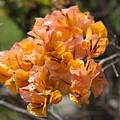 Pretty Flower by Dick Willis