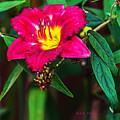 Pretty Flower by Edward Peterson