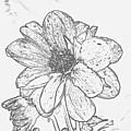 Pretty Flower by Jeramey Lende