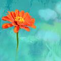 Pretty In Orange by Debbie Nobile