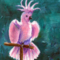 Pretty In Pink Aceo by Brenda Thour