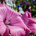 Pretty In Pink by Dean Baynham