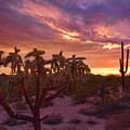 Pretty In Pink Desert Skies  by Saija  Lehtonen