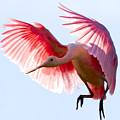 Pretty In Pink by Janet Fikar