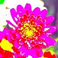 Pretty In Pink by Katy Granger