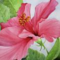 Pretty In Pink by Lorraine Ulen