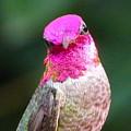 Pretty In Pink by Marillyn Meadows Bernstein