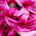 Pretty In Pink by Shawn Johnson