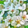 Pretty In White by Gwyn Newcombe