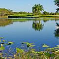 Tranquil Lake In Florida by Zalman Latzkovich
