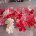 Pretty Little Flowers by Usha Shantharam