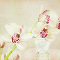 Pretty Orchids by Kim Andelkovic
