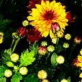 Pretty Petals by Marsha Heiken