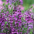 Pretty Pink And Purple Flowers by Sabrina L Ryan