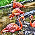 Pretty Pink Flamingos by Joan Reese