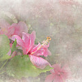 Pretty Pink Hibiscus by Michele A Loftus