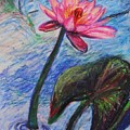 Pretty Pink In The Pond by Emily Michaud