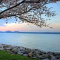 Pretty Potomac by JC Findley