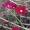 Pretty Red And Yellow Flowers In The Twigs by Debra Lynch