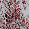 Pretty Red by Dan Friend