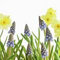Pretty Spring Flowers All In A Row by Ann Garrett