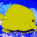 Pretty Yellow Fish by David Lee Thompson