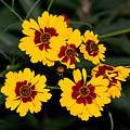 Pretty Yellow Flowers by John Black