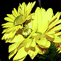 Pretty Yellow Flowers by Ericamaxine Price